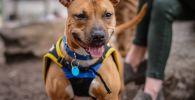 Mascota que requiere seguro para perros obligatorio