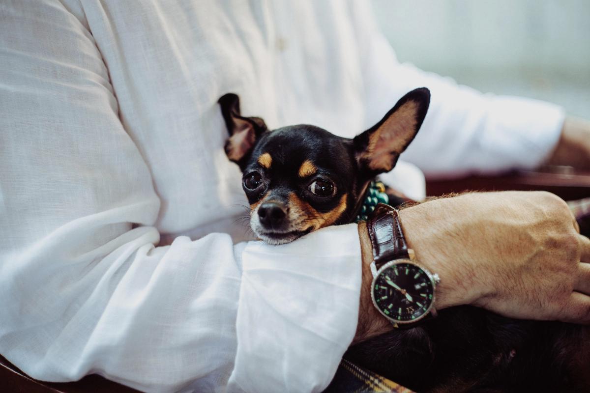Mascota que no necesita seguro para perros